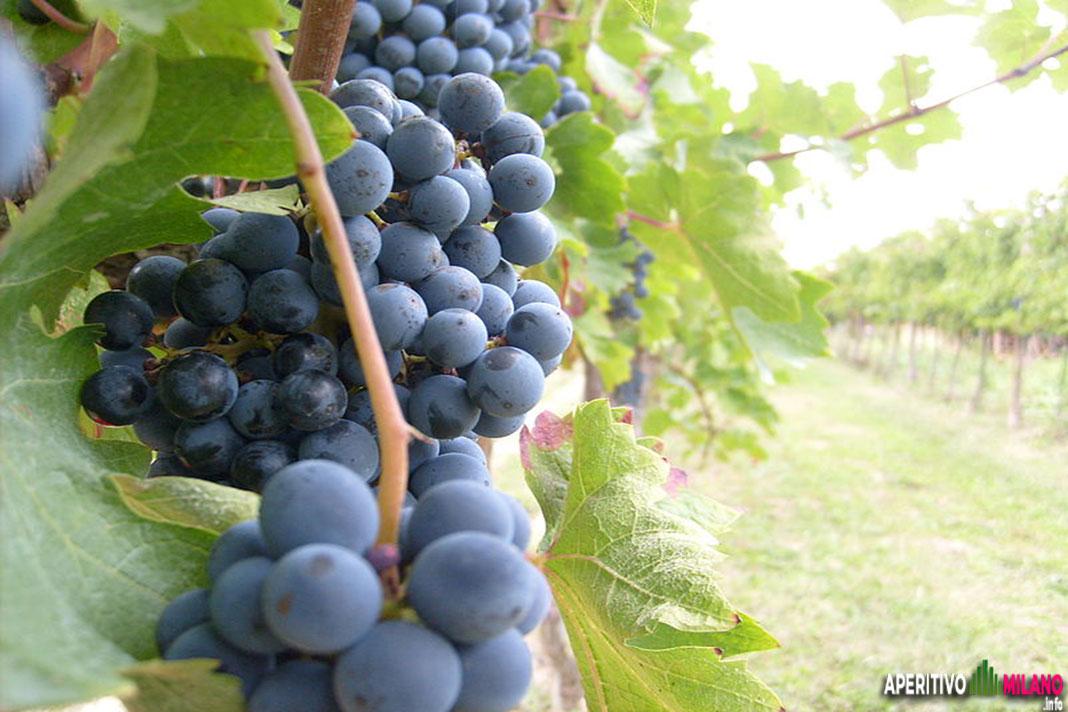 Wine Days Italy - #aperitivoamilano.info
